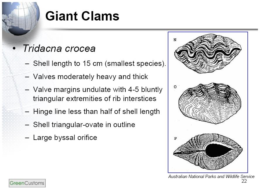 Diagram Of A Giant Clam Wiring Diagram Database